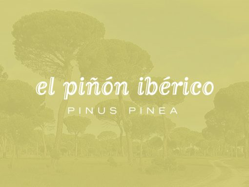 Grupo Operativo PINEA